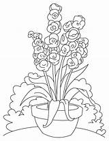 Flower Coloring Bulb Gladiolus Pages Template sketch template