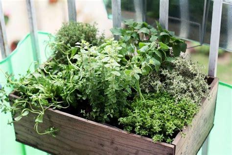 les herbes aromatiques en cuisine les 25 meilleures idées concernant conception de jardin d