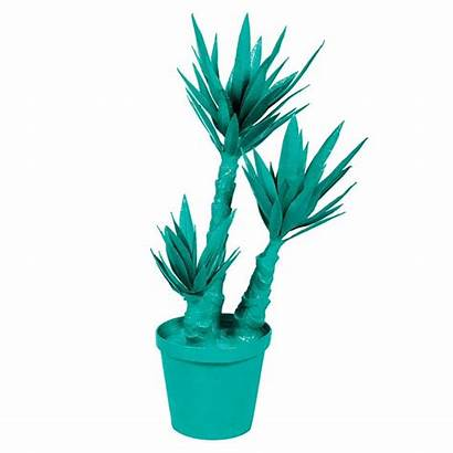 Yucca Plant Straydogdesigns Plants Objet Potted Toxic