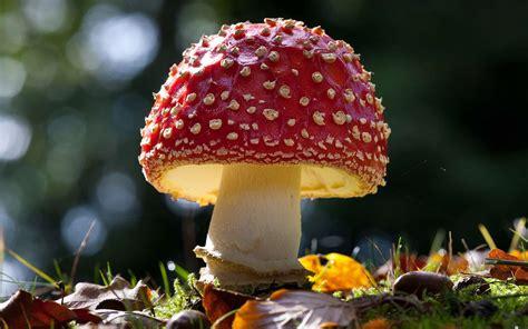 31 Excellent Hd Mushroom Wallpapers