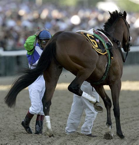 horses shoot they derby kentucky leg broken don equine barbaro legs broke innovators help these why timothy clary credit getty