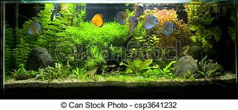 photo de disque fish exotique 2 aquarium eau douce a beau csp3641232 recherchez