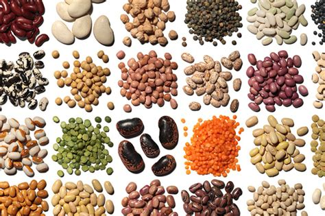 legumes cuisines your legumes feature food