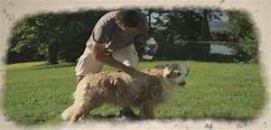 Laver Chien Savon Noir : un shampooing naturel et efficace pour les chiens essayez le savon noir ~ Melissatoandfro.com Idées de Décoration