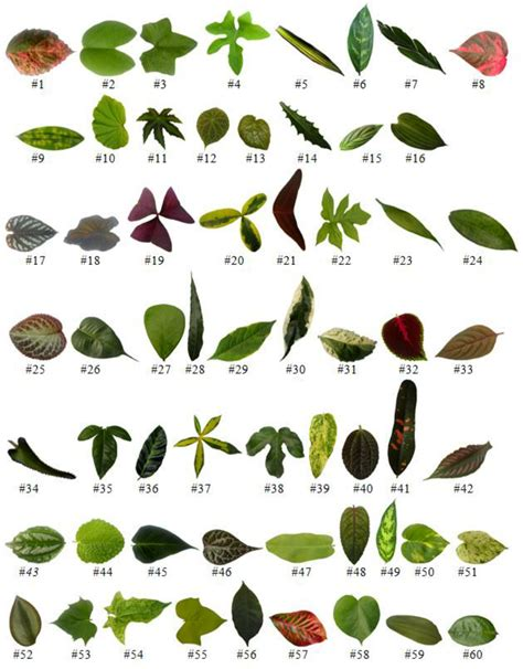 Sixty Kinds Of Leaves In The Dataset Foliage Download