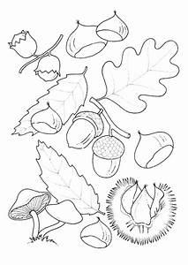 Feuilles D Automne à Imprimer : coloriage automne la saison des fruits ~ Nature-et-papiers.com Idées de Décoration