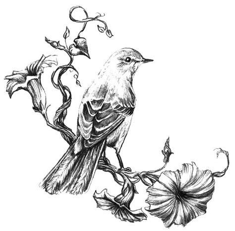 mockingbird staring eye coloring pages mockingbird