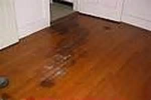 dogs and hardwood floors flooring ideas home