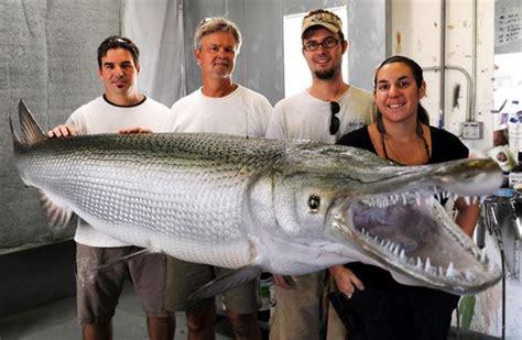 gar alligator fish biggest river long feet monsters largest record caught catfish ever carp florida michigan asian massive prehistoric taxidermy
