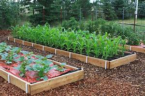 In The Garden  Raised Beds Offer Bountiful Benefits
