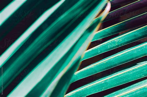 Exotic floral background; palm leaf pattern/background by