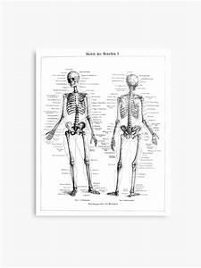 Diagram Of The Human Skeleton
