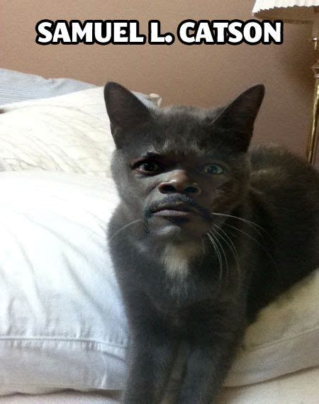 Samuel L Catson Hilarious Humor And Face Swaps