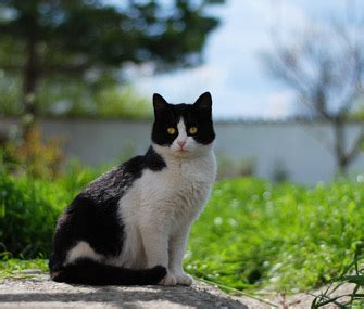 Keep Cats In Backyard by How Can I Keep The S Cat Out Of My Yard