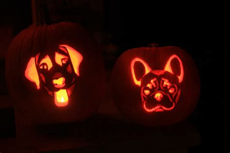 puppy pumpkin carving ballwalkparkseattledogwalker what the dogs did today to make me laugh and other fascinating