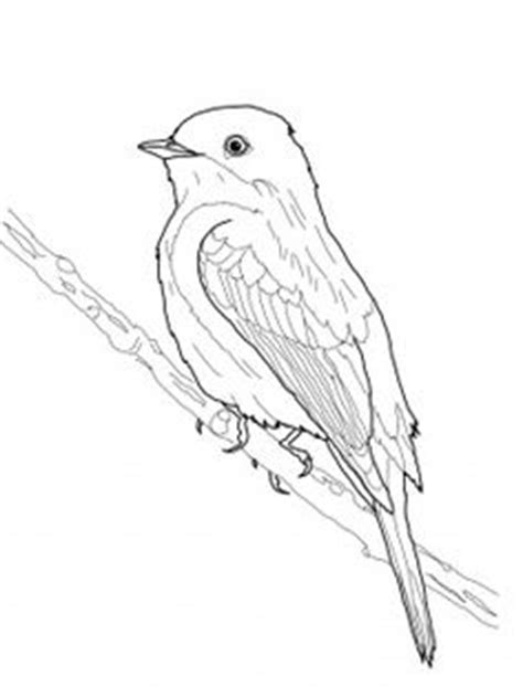 Eastern Phoebe Coloring Page