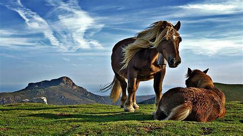 horses sleeping habits strange seven tweet