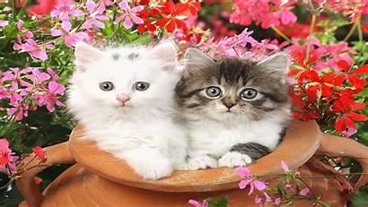 Cats Wallpapers Cat Desktop Lovers