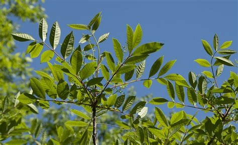 The Best Ways To Spot Poison Ivy Oak Sumac Off The