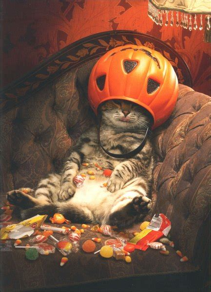 cat  candy bucket funny humorous halloween card
