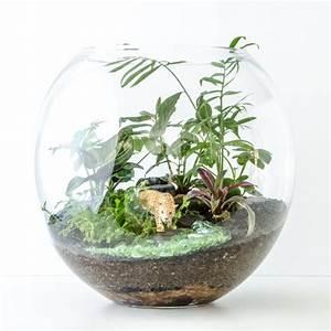 Pflanzen Für Terrarium : was sie f r ein terrarium zuhause wirklich brauchen fresh ideen f r das interieur dekoration ~ Orissabook.com Haus und Dekorationen