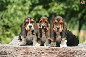 Some important information for potential buyers of a ...