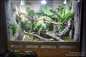 Pflanzen Terrarium Einrichten : 25 einzigartige terrarium einrichtung ideen auf pinterest terrarium einfache zeichnungen von ~ Watch28wear.com Haus und Dekorationen