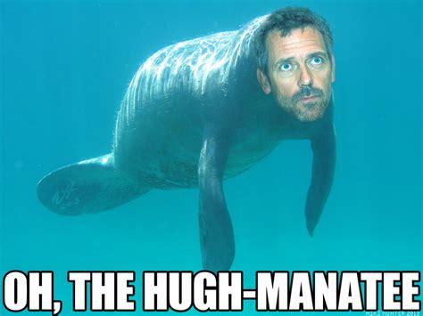 Manatee Memes - the name s manatee hugh manatee cutetropolis