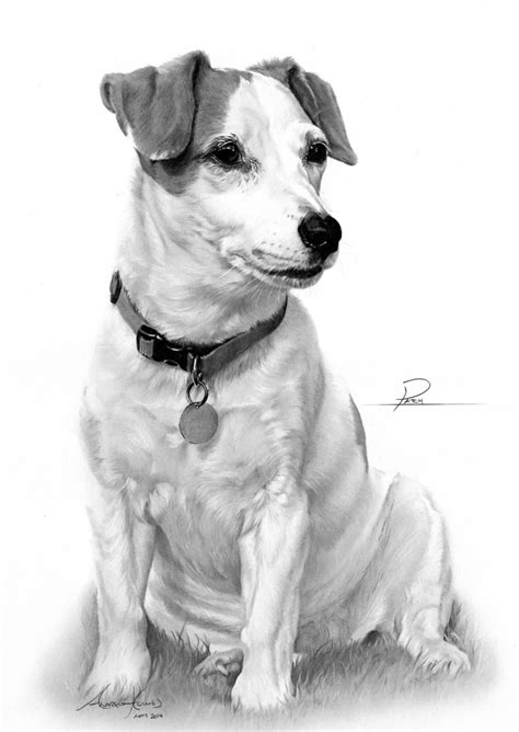 commission jack russell terrier  captured  pencil
