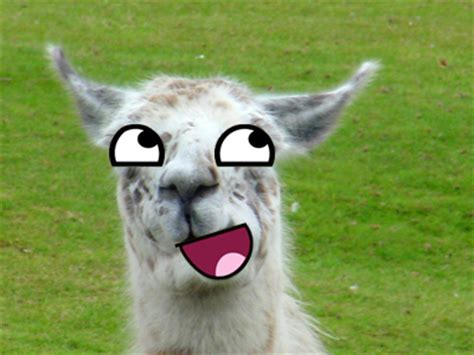 Awesome Llama By Ryuunake98 On Deviantart