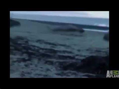 Real mermaid found dead on beach I saw this on Discovery ...