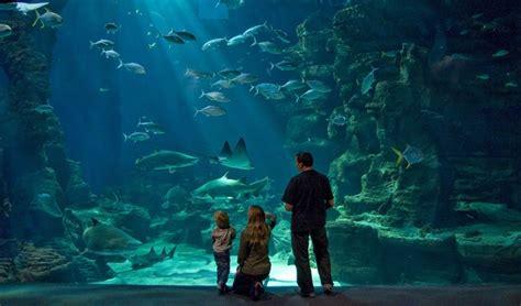 pendant les vacances gagnez vos invitations pour l aquarium mare nostrum radio aviva 88 fm
