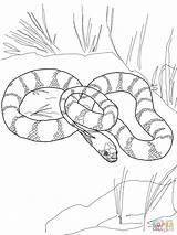 Snake Coloring Pages King California Snakes Realistic Garter Printable Drawing Mamba Tiger Python Water Flower Plains Getdrawings Kingsnake Sheets Supercoloring sketch template