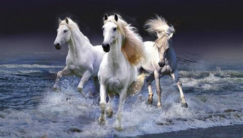 horse breeds horses most wild fascinating worlds abs apr animals
