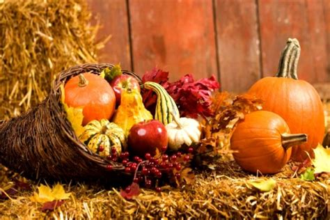 autumn harvest photography abstract background