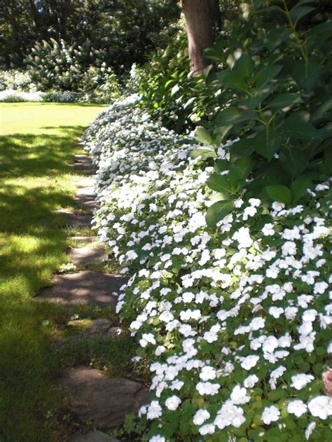 small white border flowers 25 best ideas about white gardens on pinterest flower garden borders flowers by post and