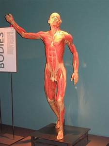 Human Body Parts Photogallery under the skin | Lets Talk ...