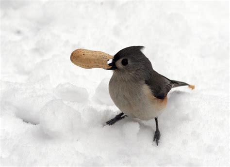diy how to make suet winter bird feeders winter bird with