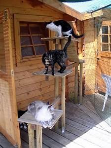 Repulsif Chat Exterieur Jardiland : arbre chat loigner les autres chats de son jardin ~ Melissatoandfro.com Idées de Décoration