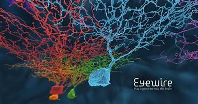 Eyewire Brain Map Neurons Science Neuroscience Human