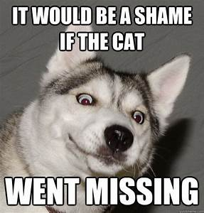 #Husky memes | #Siberian #Husky | Pinterest | I love cats ...