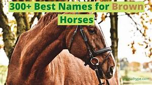 339 Names For Brown Horses