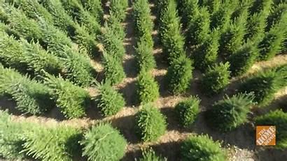 Tree Christmas Farms Trees Depot Lots Farm