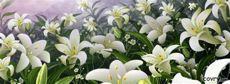 white lilies cover covrycom