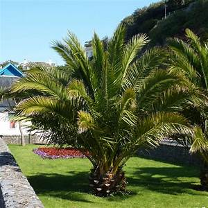 Eye Catching Tropical Plants For Your Outdoor Garden Plant