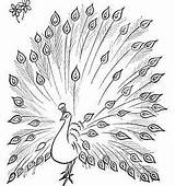 Peacock Coloring Drawing Pages Simple Sketch Colouring Peacocks Its Tail Printable Open Animal Colour Kid Green Outline Feather Drawings Hd sketch template