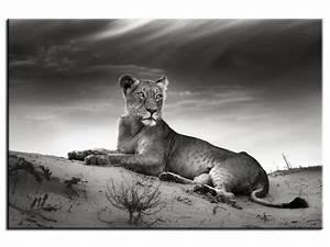 Tableau Photo Noir Et Blanc : tableau photo lionne en toile plexi alu tableaux ~ Melissatoandfro.com Idées de Décoration