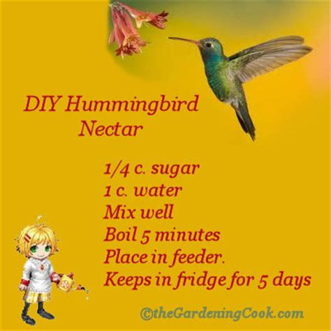 diy hummingbird food diy humming bird nectar the gardening cook