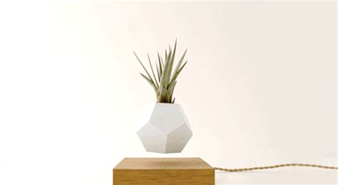 best house plants these floating pots let your house plants levitate and