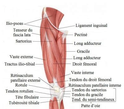 mal interieur cuisse gauche douleur 224 la cuisse gauche ou droite int 233 rieur ant 233 rieur et ext 233 rieur